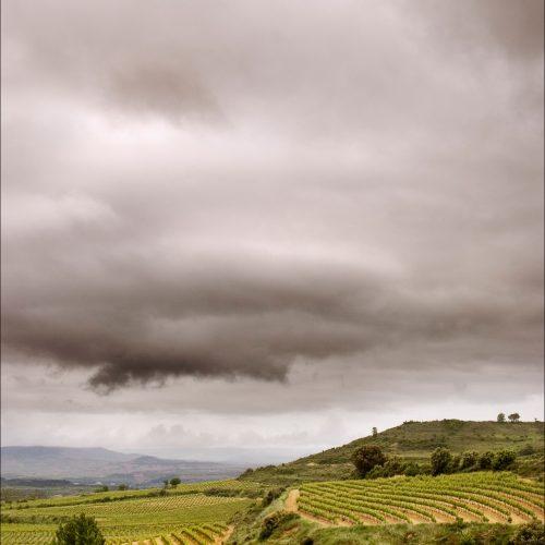 Foto de viñas con el cielo oscurecido